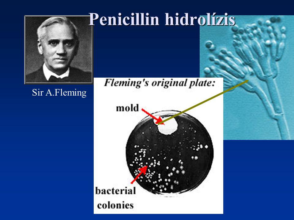 Penicillin hidrolízis