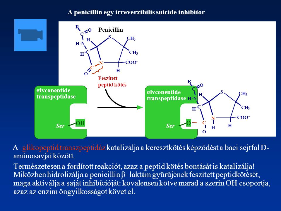 A penicillin egy irreverzibilis suicide inhibitor