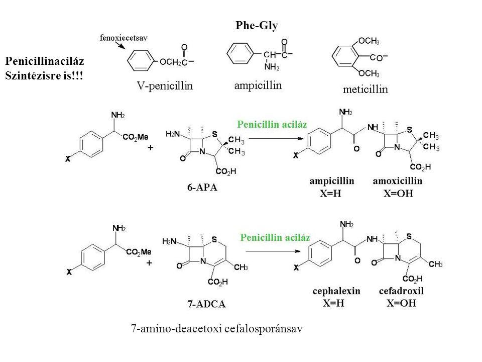 Phe-Gly Penicillinaciláz Szintézisre is!!! 7-amino-deacetoxi cefalosporánsav