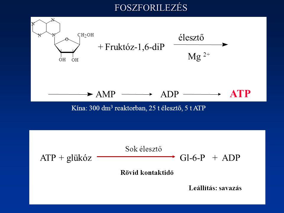 ATP FOSZFORILEZÉS AMP ADP + Fruktóz-1,6-diP élesztő Mg