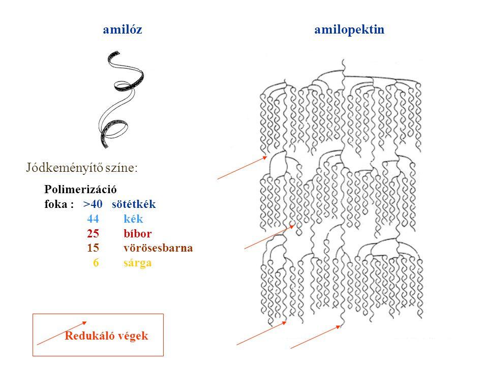 amilóz amilopektin Jódkeményítő színe: Polimerizáció