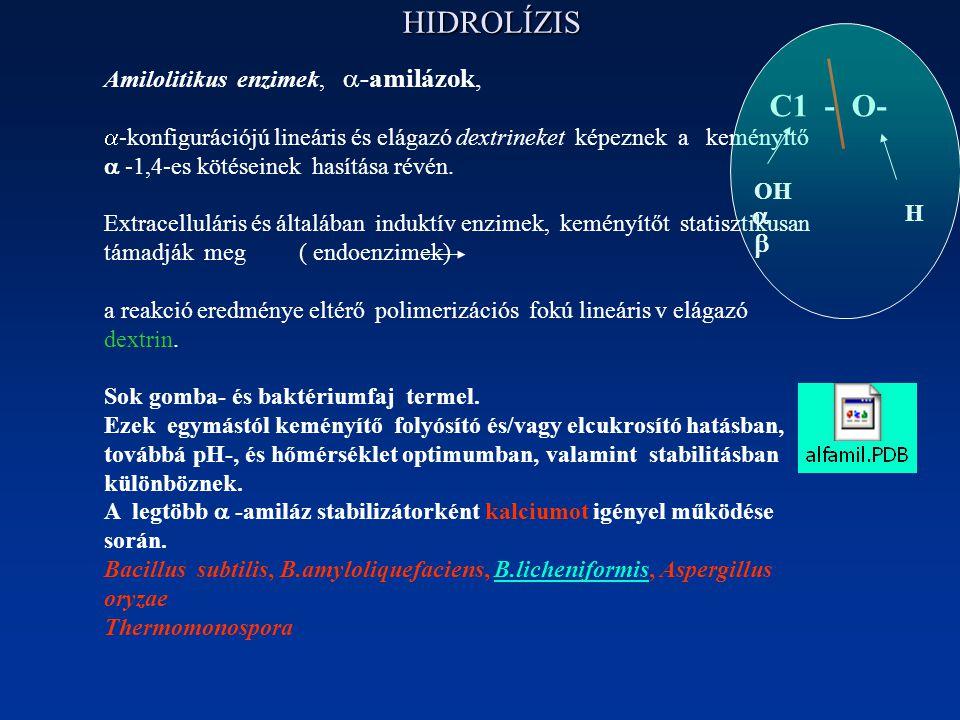 HIDROLÍZIS C1 - O-   Amilolitikus enzimek, -amilázok,