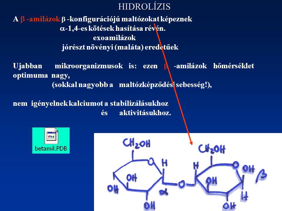 HIDROLÍZIS A  -amilázok  -konfigurációjú maltózokat képeznek