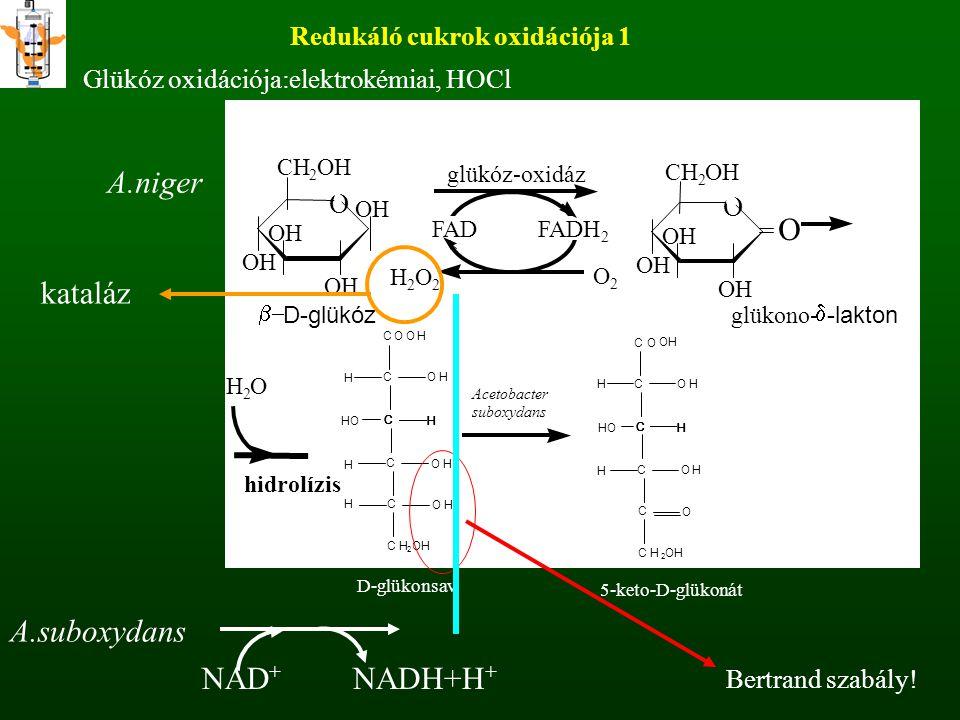 Redukáló cukrok oxidációja 1