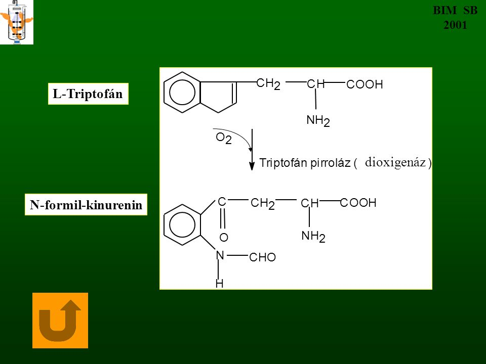L-Triptofán dioxigenáz N-formil-kinurenin BIM SB 2001 C H 2 N O T r i