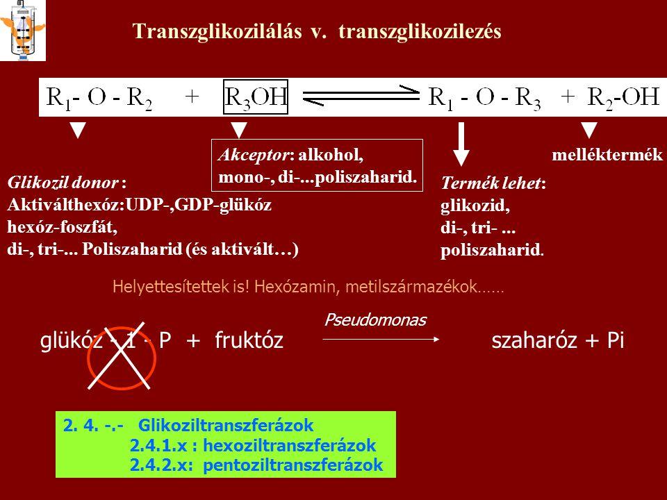 Transzglikozilálás v. transzglikozilezés