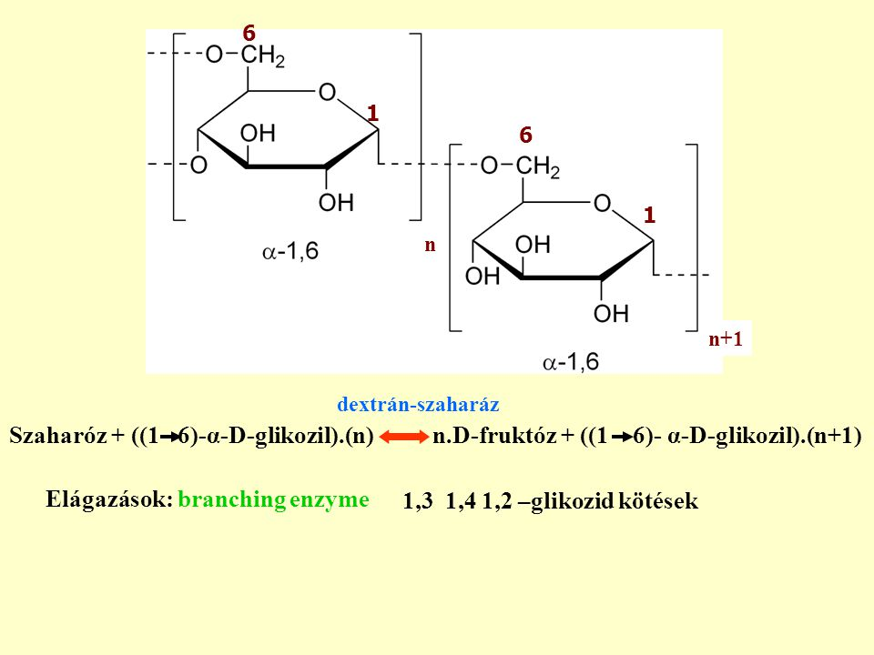 Elágazások: branching enzyme 1,3 1,4 1,2 –glikozid kötések