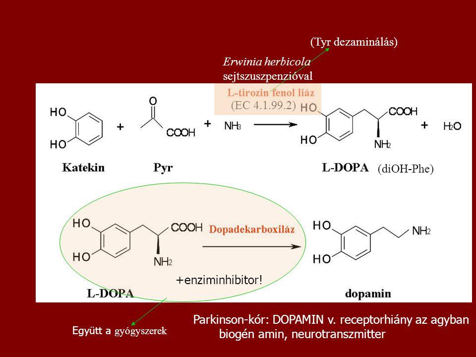 Parkinson-kór: DOPAMIN v. receptorhiány az agyban