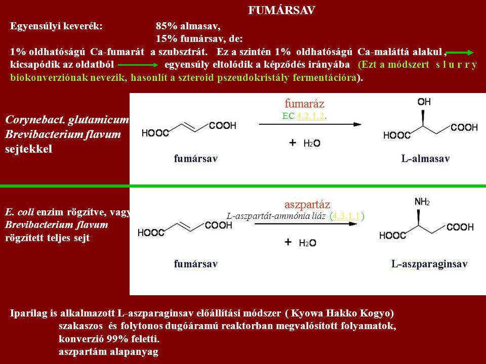 Corynebact. glutamicum Brevibacterium flavum sejtekkel