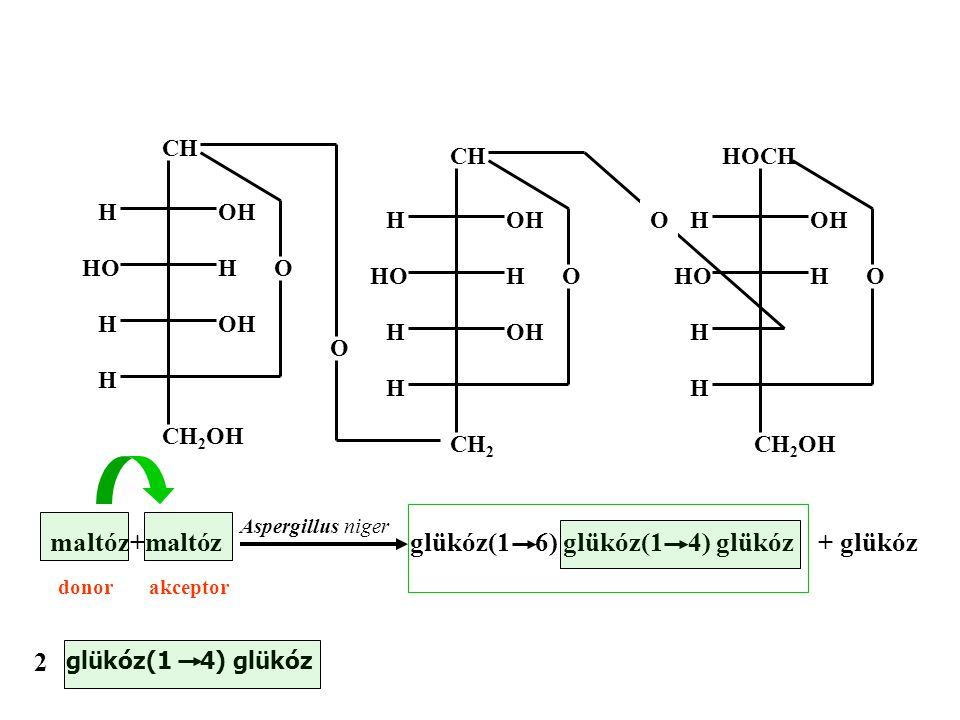 glükóz(1 6) glükóz(1 4) glükóz + glükóz
