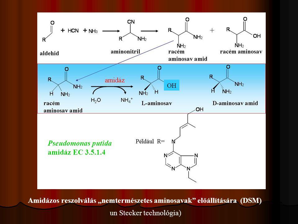 """Amidázos reszolválás """"nemtermészetes aminosavak előállítására (DSM)"""