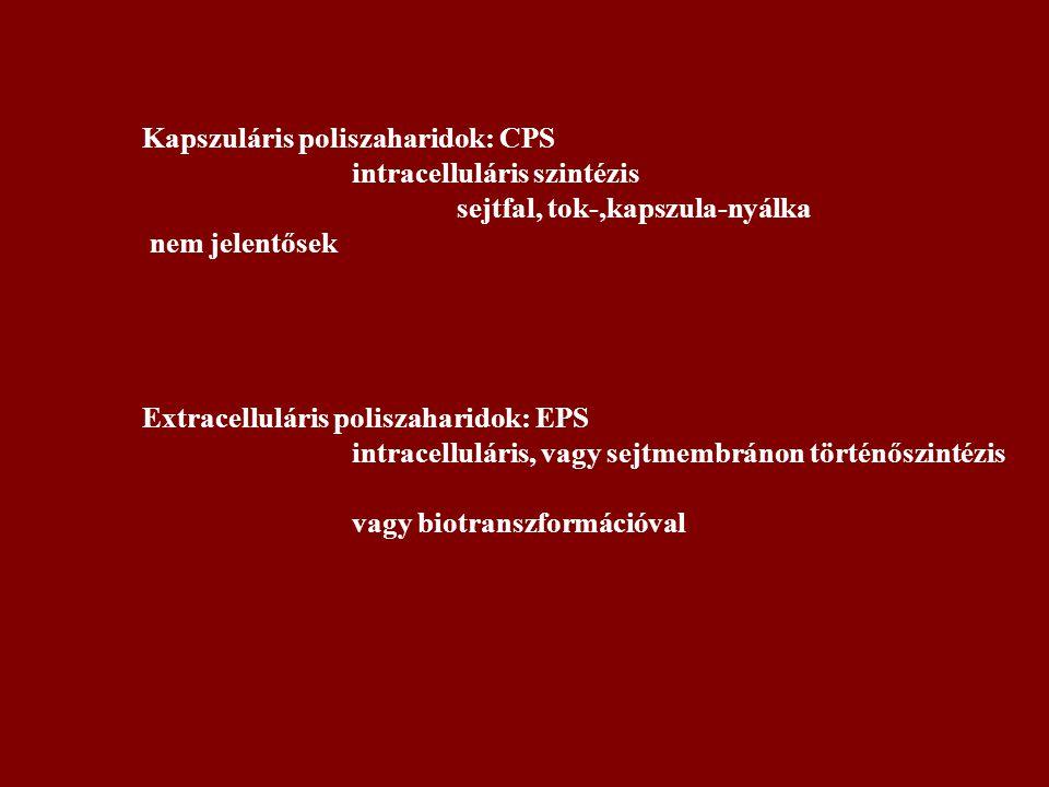 Kapszuláris poliszaharidok: CPS
