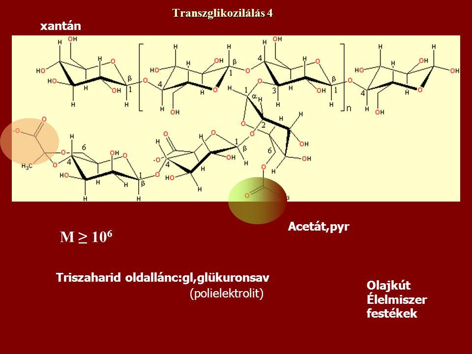 M ≥ 106 Transzglikozilálás 4 xantán Acetát,pyr