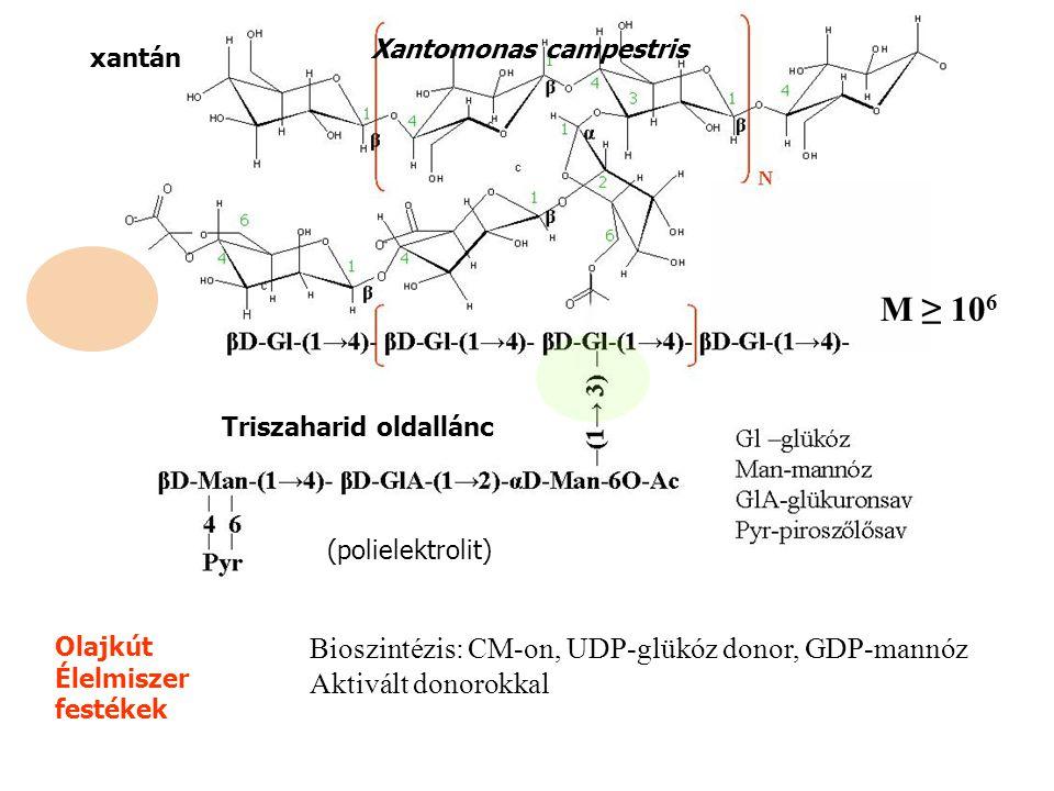 M ≥ 106 Bioszintézis: CM-on, UDP-glükóz donor, GDP-mannóz