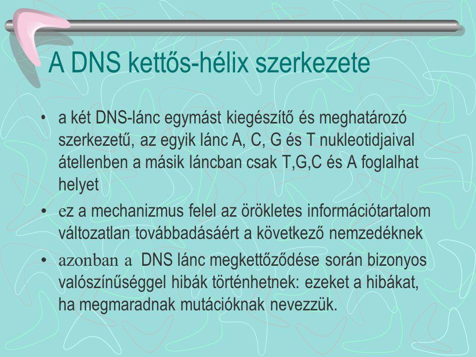 A DNS kettős-hélix szerkezete