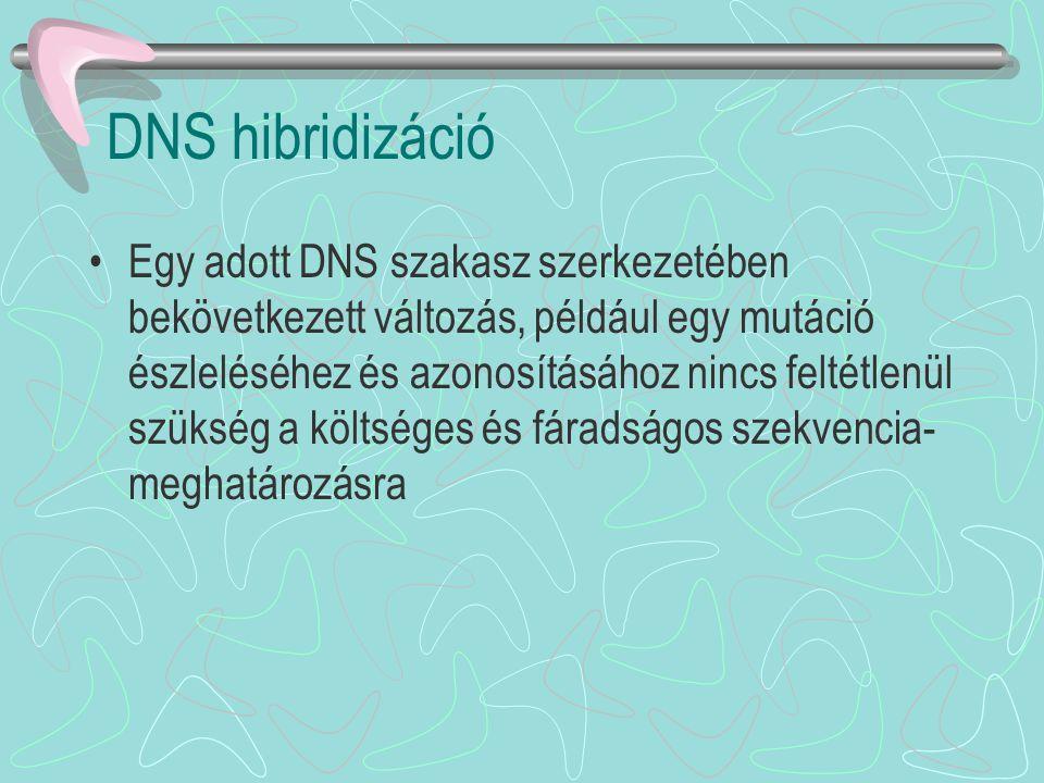 DNS hibridizáció
