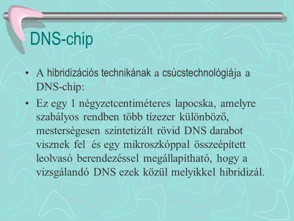 DNS-chip A hibridizációs technikának a csúcstechnológiája a DNS-chip:
