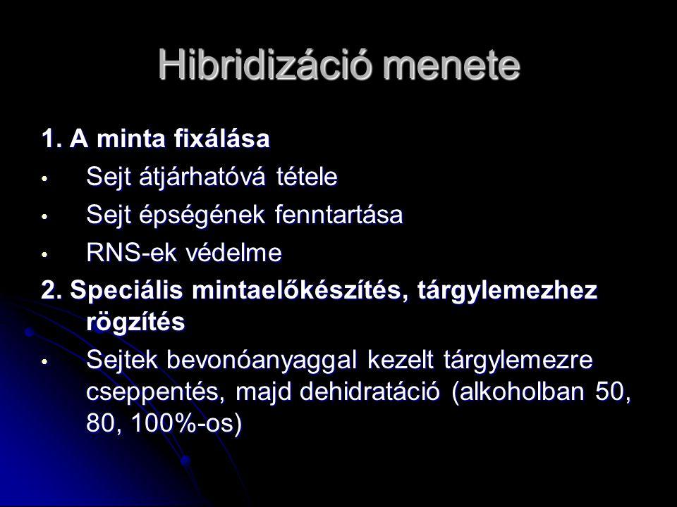 Hibridizáció menete 1. A minta fixálása Sejt átjárhatóvá tétele