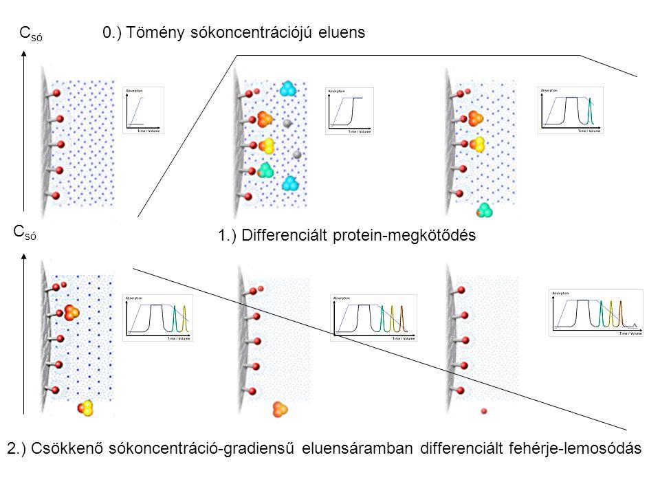 Csó 0.) Tömény sókoncentrációjú eluens. Csó. 1.) Differenciált protein-megkötődés.