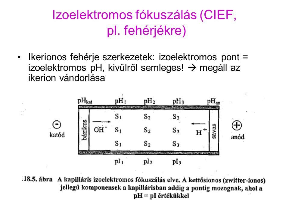 Izoelektromos fókuszálás (CIEF, pl. fehérjékre)