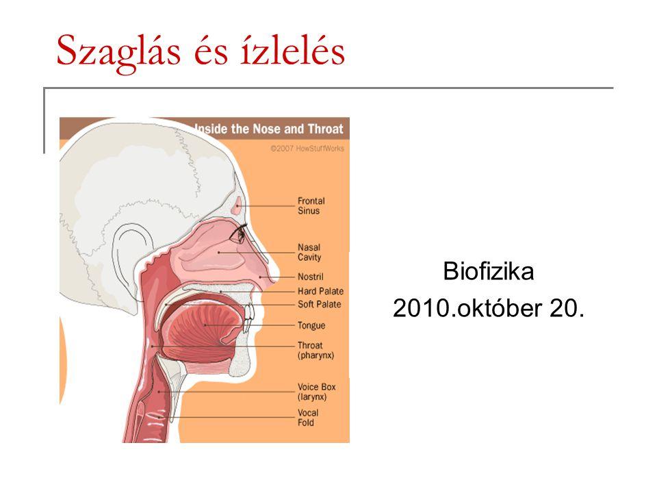Szaglás és ízlelés Biofizika 2010.október 20.