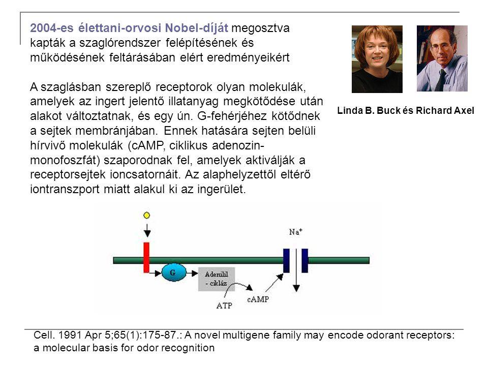 2004-es élettani-orvosi Nobel-díját megosztva kapták a szaglórendszer felépítésének és működésének feltárásában elért eredményeikért