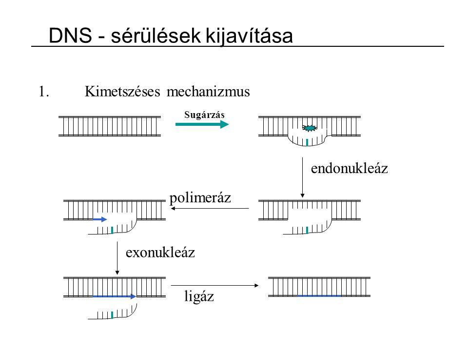 DNS - sérülések kijavítása