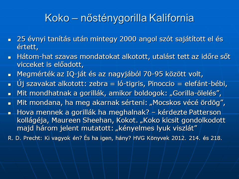 Koko – nősténygorilla Kalifornia