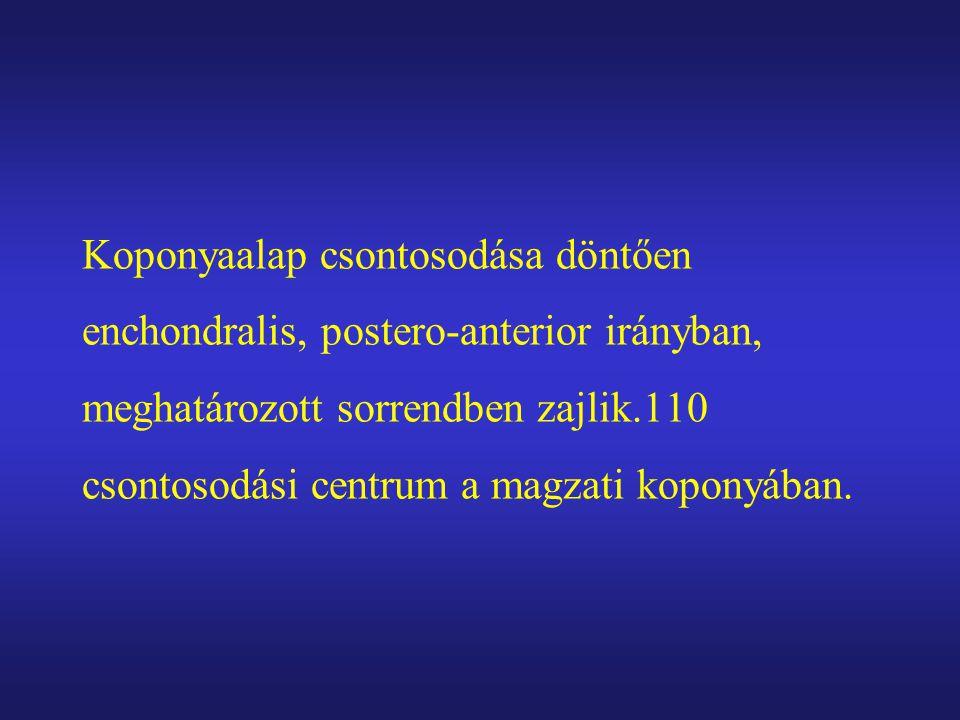 Koponyaalap csontosodása döntően enchondralis, postero-anterior irányban, meghatározott sorrendben zajlik.110 csontosodási centrum a magzati koponyában.