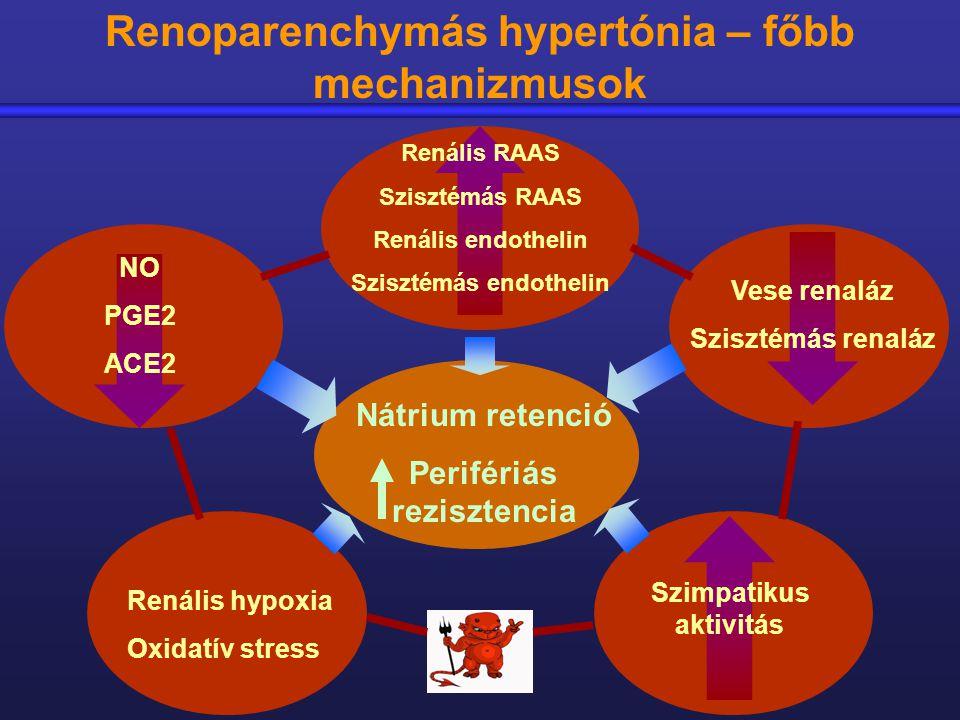 Renoparenchymás hypertónia – főbb mechanizmusok
