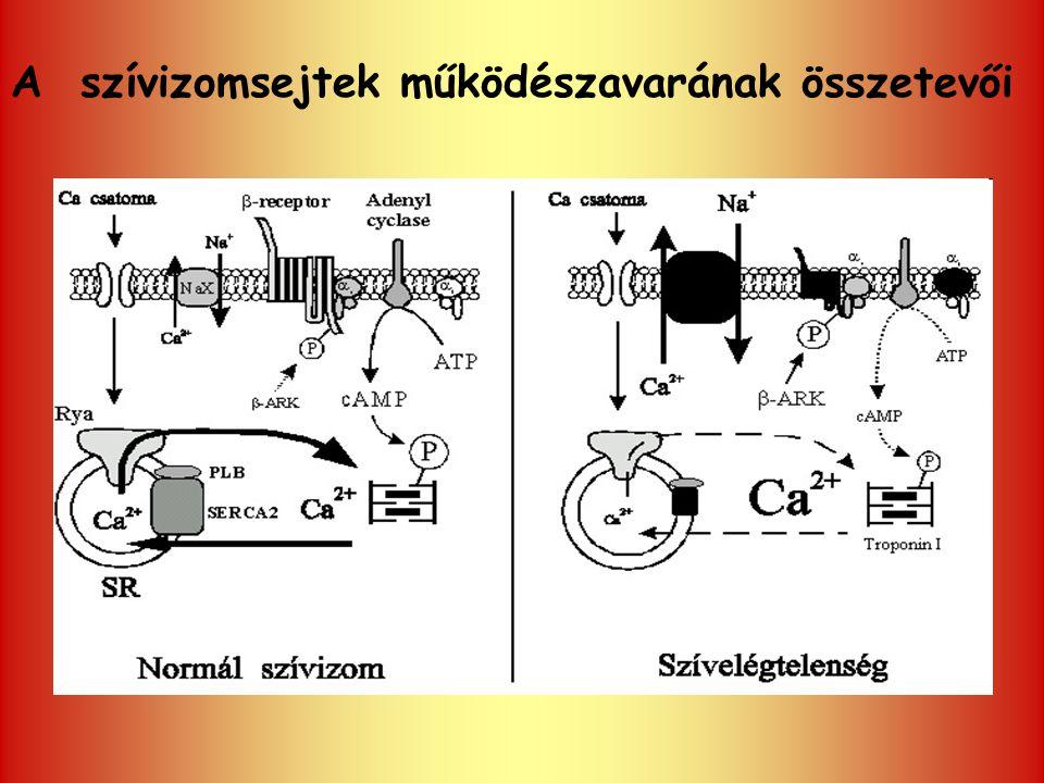 A szívizomsejtek működészavarának összetevői