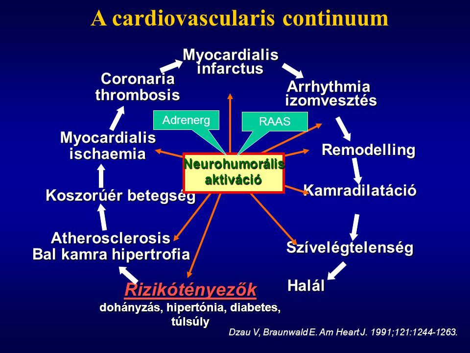 A cardiovascularis continuum