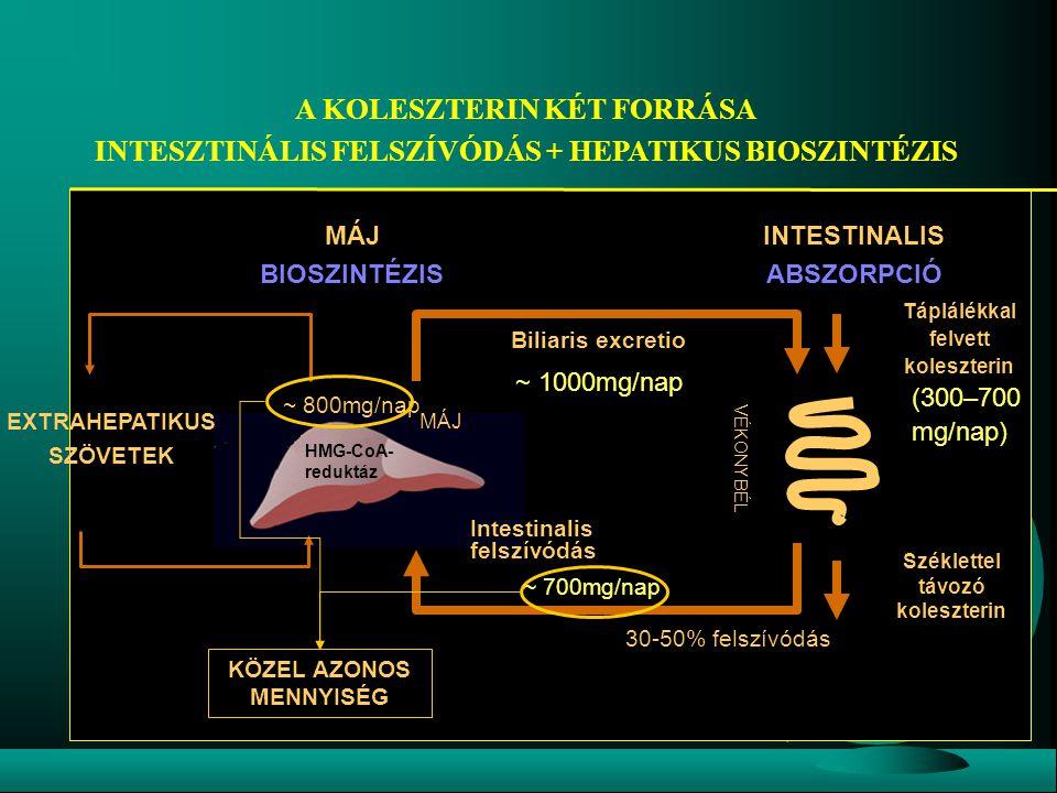 A KOLESZTERIN KÉT FORRÁSA INTESZTINÁLIS FELSZÍVÓDÁS + HEPATIKUS BIOSZINTÉZIS