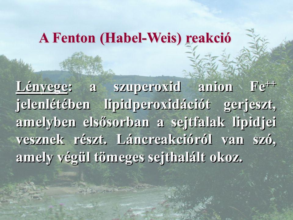 A Fenton (Habel-Weis) reakció