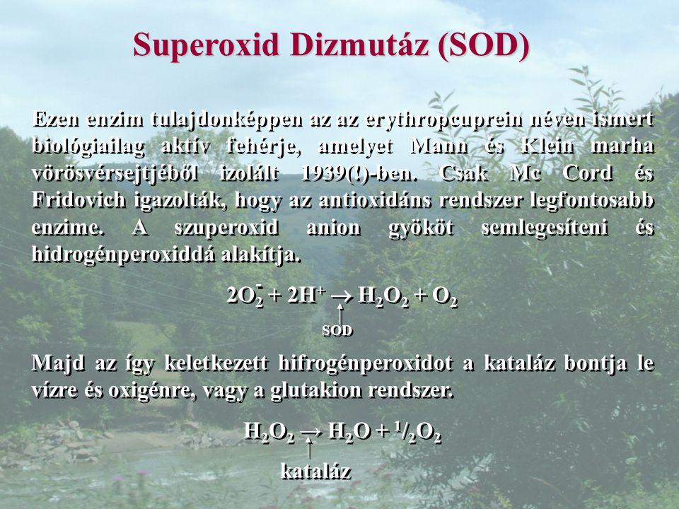 Superoxid Dizmutáz (SOD)