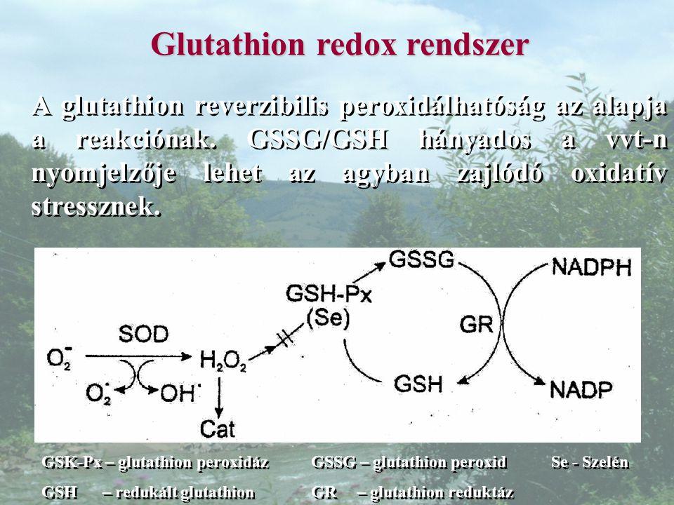 Glutathion redox rendszer