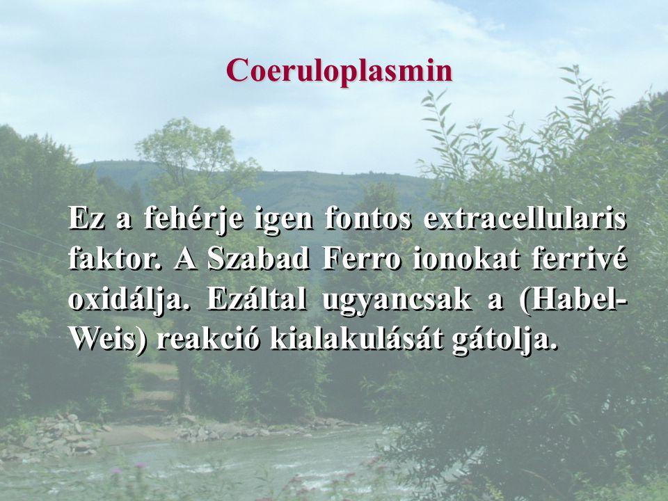 Coeruloplasmin