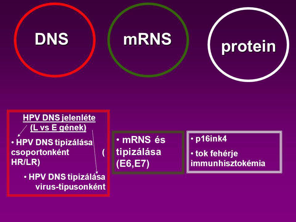 HPV DNS jelenléte (L vs E gének)