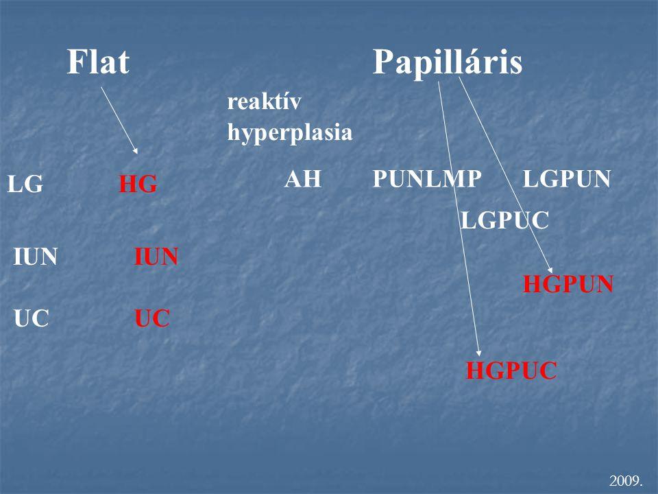 Flat Papilláris reaktív hyperplasia AH PUNLMP LGPUN LG HG LGPUC IUN UC