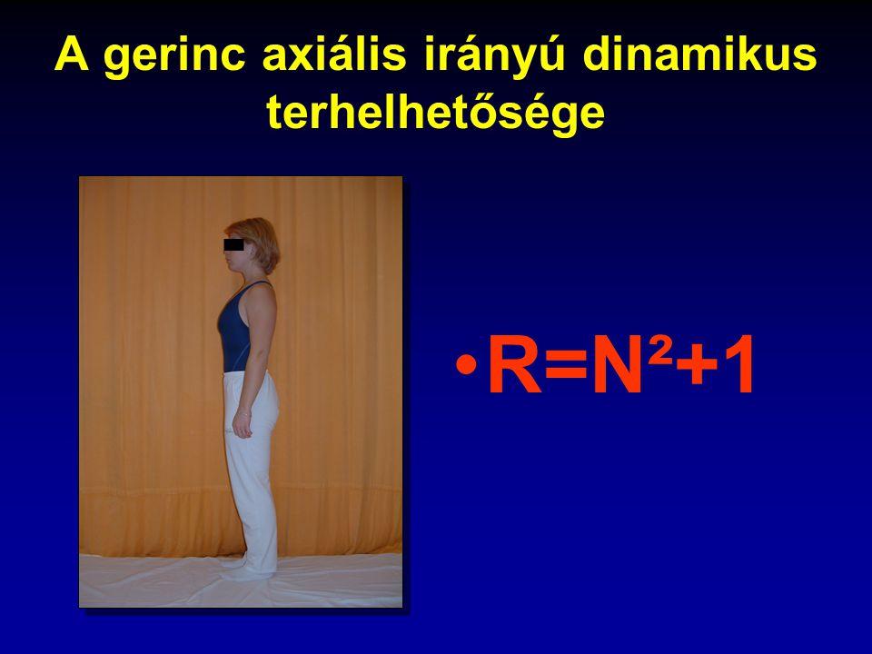 A gerinc axiális irányú dinamikus terhelhetősége