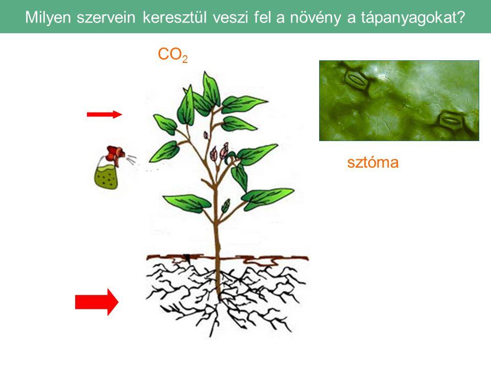 Milyen szervein keresztül veszi fel a növény a tápanyagokat