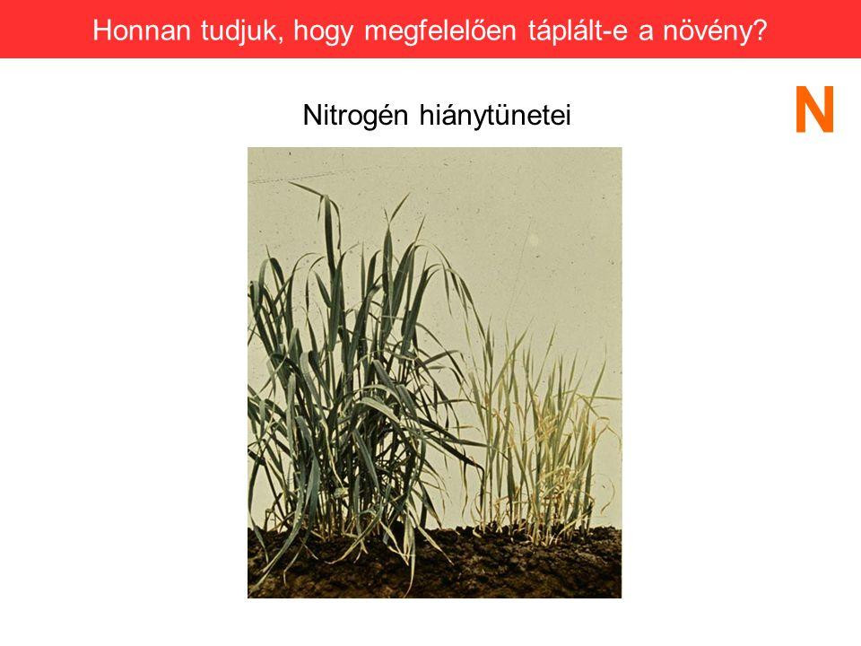 N Honnan tudjuk, hogy megfelelően táplált-e a növény
