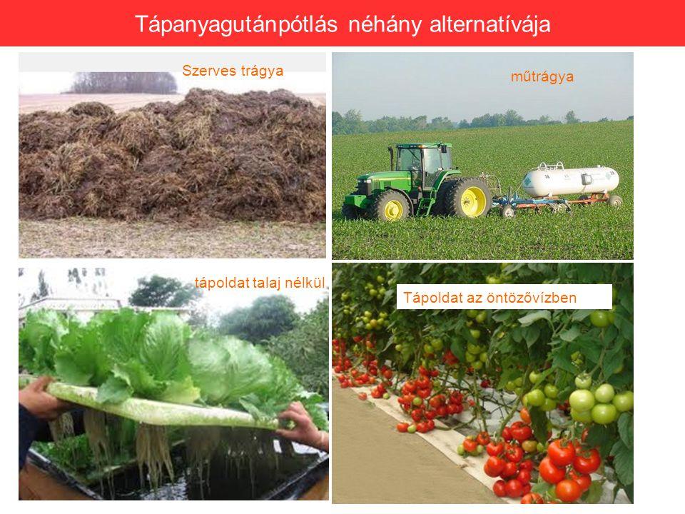 Tápanyagutánpótlás néhány alternatívája