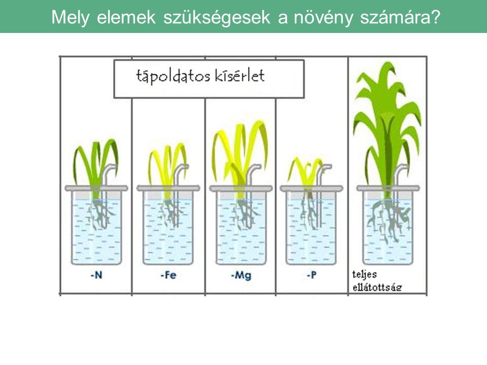 Mely elemek szükségesek a növény számára