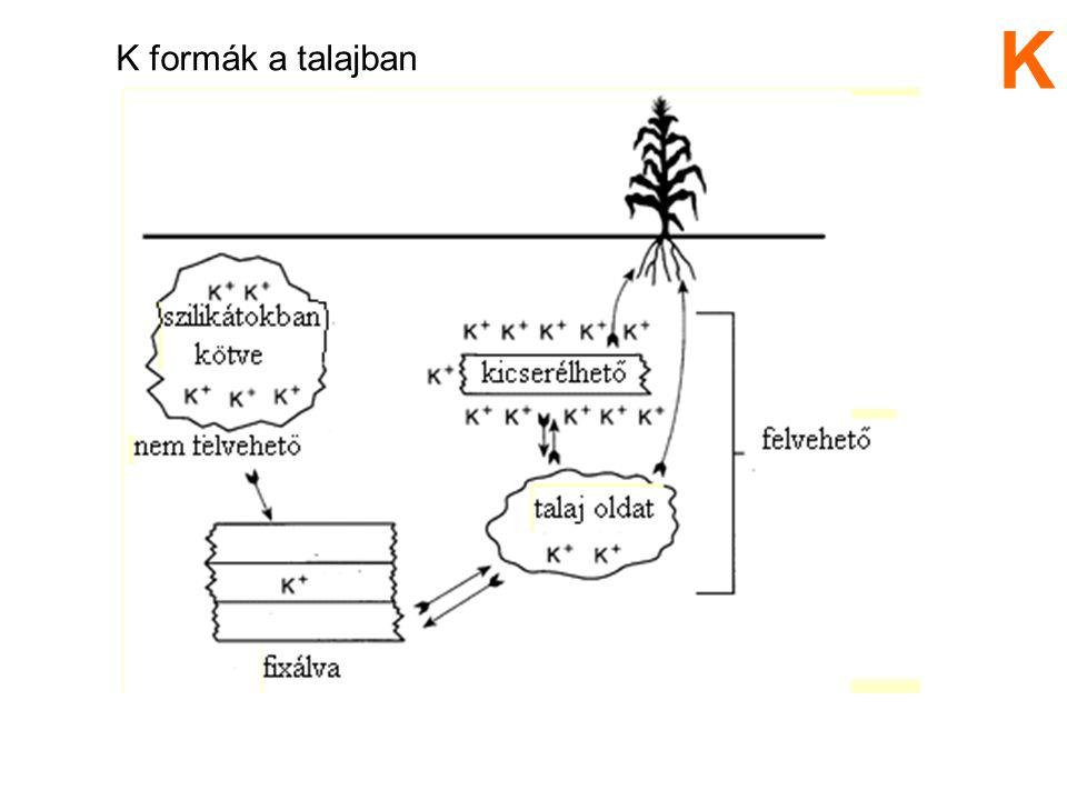 K K formák a talajban 5