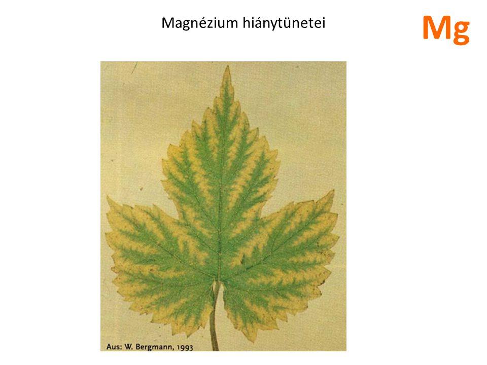 Magnézium hiánytünetei