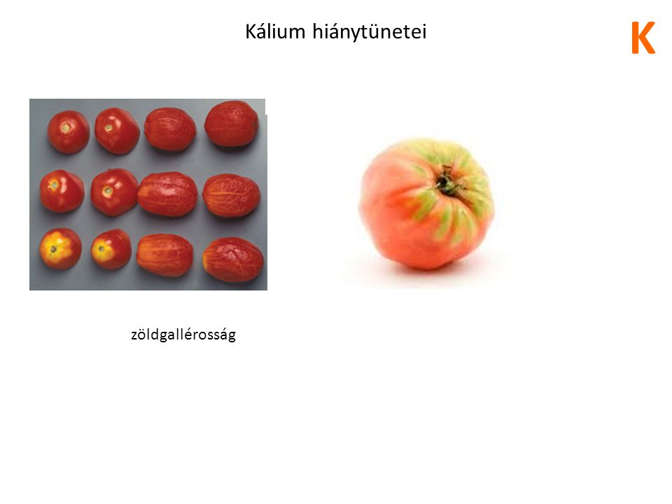 K Kálium hiánytünetei zöldgallérosság 32