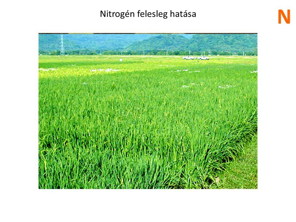Nitrogén felesleg hatása