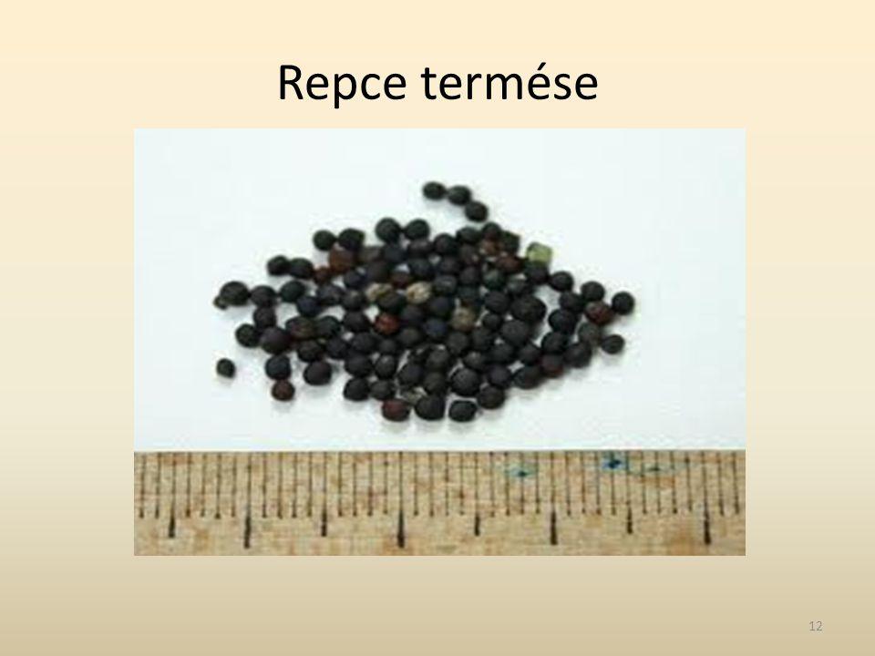 Repce termése