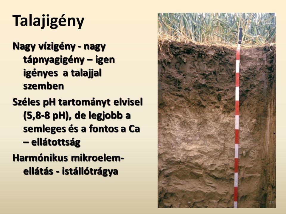 Talajigény Nagy vízigény - nagy tápnyagigény – igen igényes a talajjal szemben.